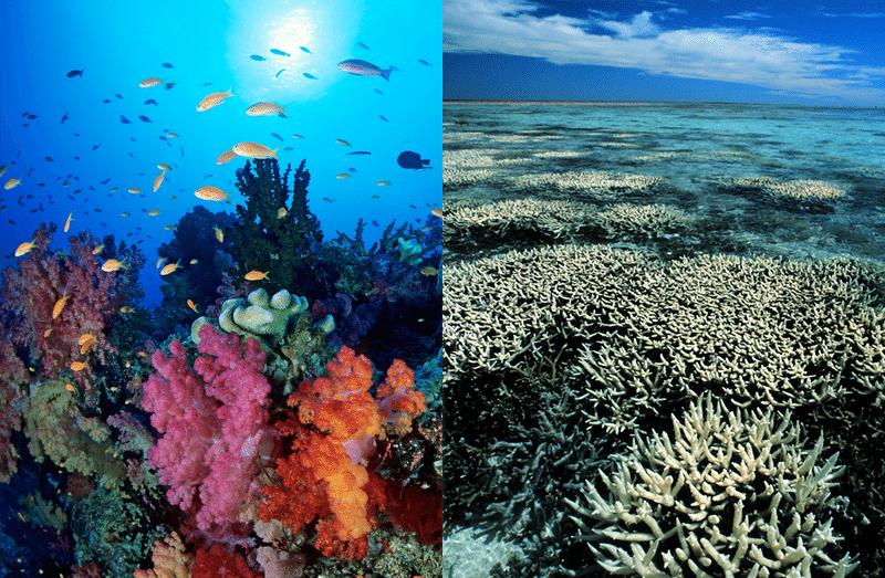 Η εξαφάνιση των κοραλλιογενών υφάλων