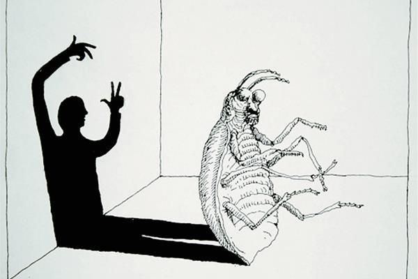 Το φαινόμενο της κατσαρίδας