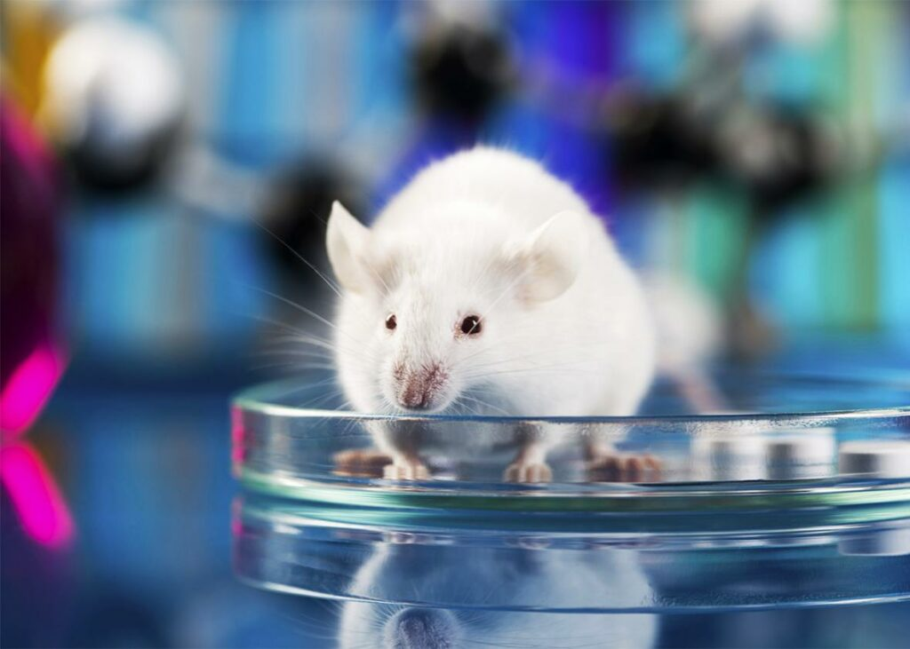 Προστασία των σπονδυλωτών ζώων που χρησιμοποιούνται για πειραματικούς σκοπούς