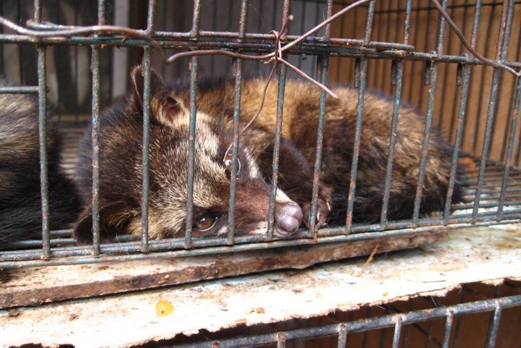 Παράνομο εμπόριο άγριων ζώων: Η σκληρή πραγματικότητα και η προστασία του νόμου